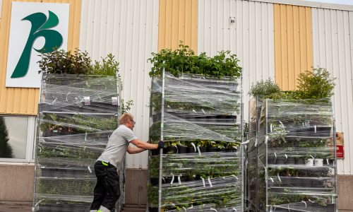 Fotografering till tryck och hemsida Ängelholma Plantskola 2021