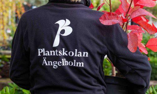 Fotografering till tryck och hemsida Ängelholma Plantskola 2019